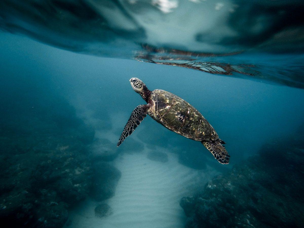 Šta znači sanjati kornjaču?