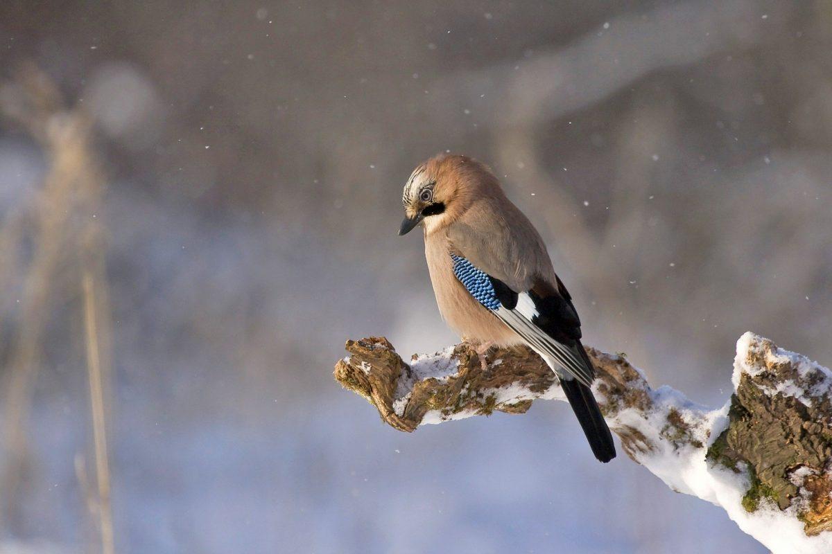 Šta znači sanjati ptice?