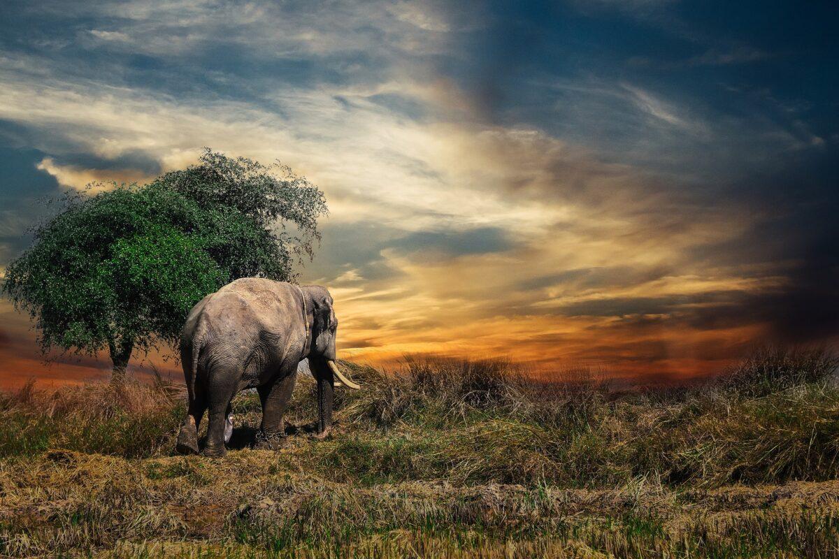 Šta znači sanjati slona?